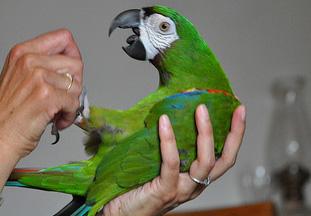 En la consulta del veterinario