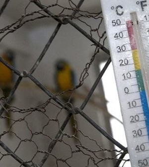 sofia-parrots_1235194i