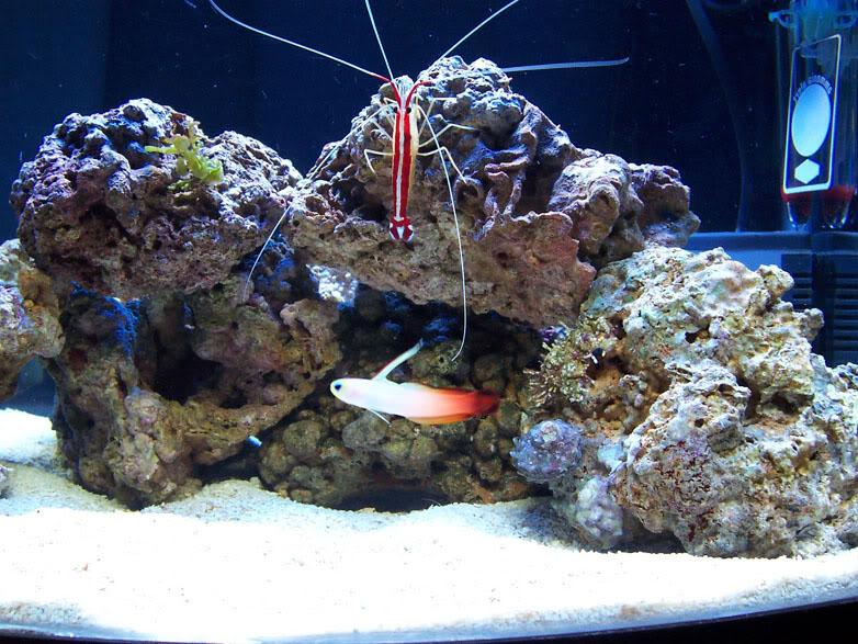 Nano acuarios marinos infoex ticos for Peces de acuario marino