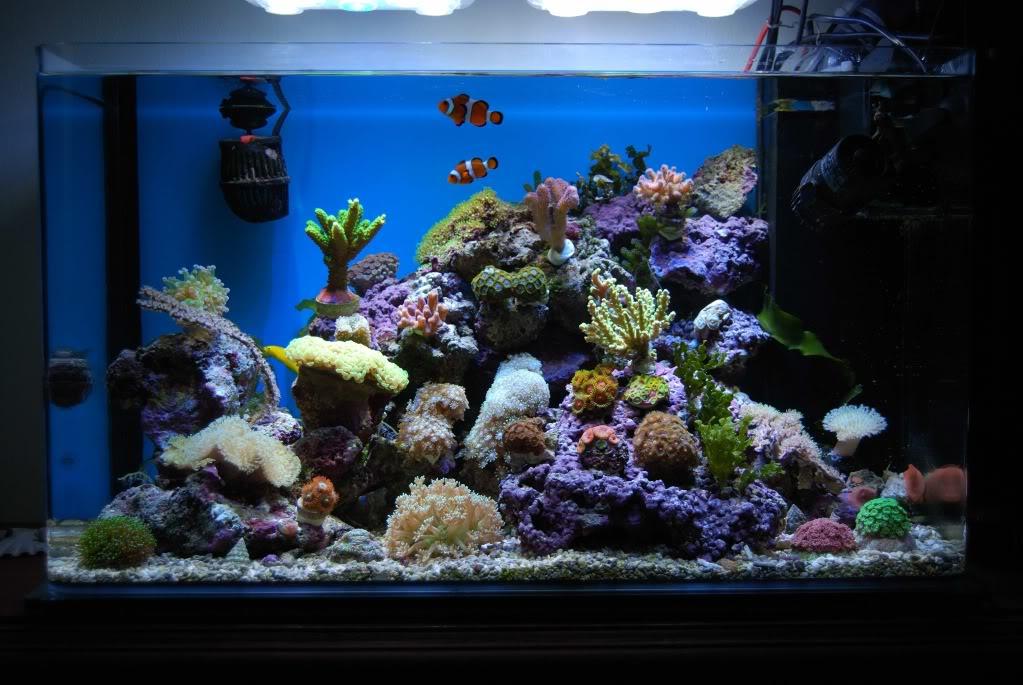 nano acuarios marinos infoex ticos On peces para acuario de 20 litros