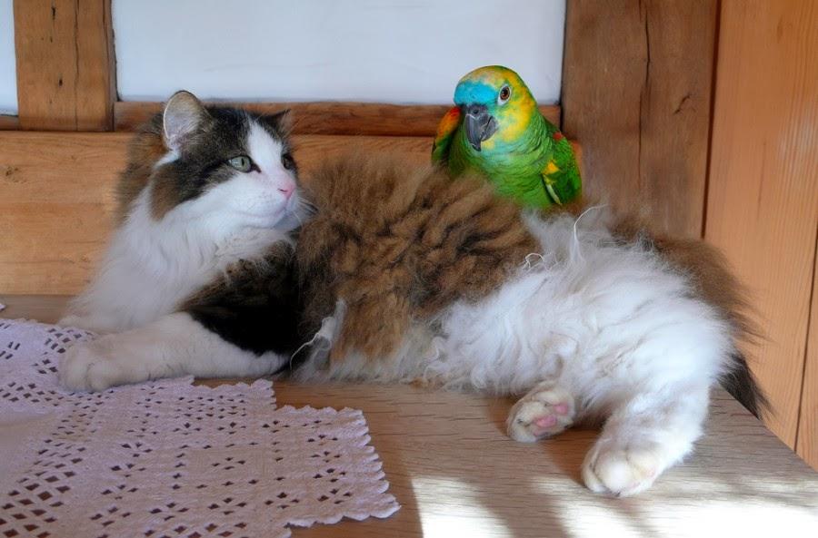 4. Happy Birds n' Pals Feathery Friday !