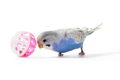 Playful Parakeet