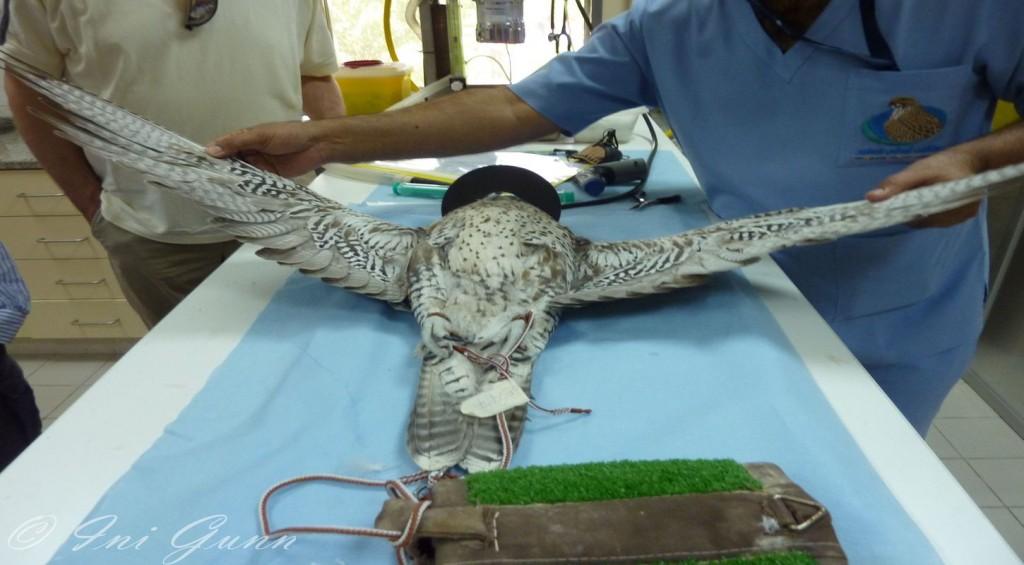 Experience-Abu-Dhabi-Falcon-Hospital-Tour