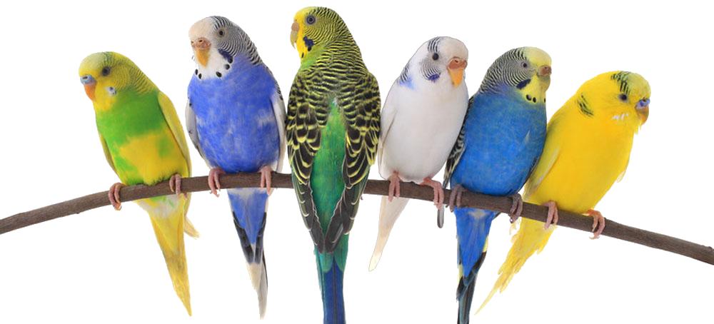birds-exotics-pets