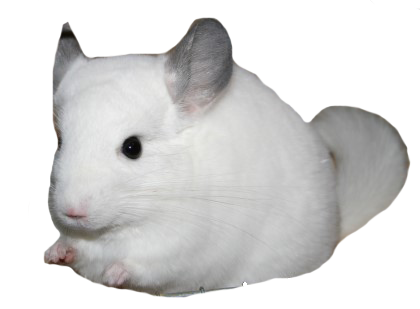 blanco wilson