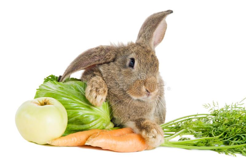 bruin-konijn-met-groenten-15835837