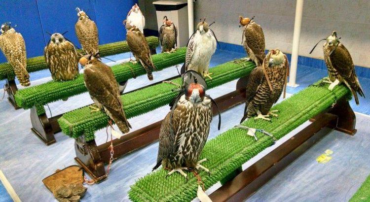 falcon-hospital-750x410