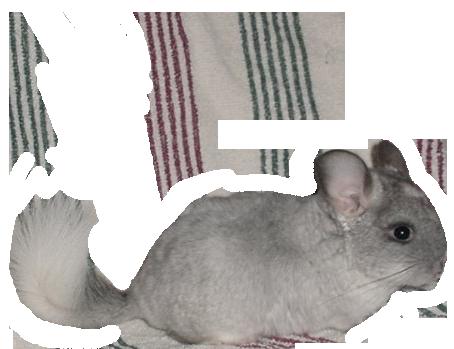 velvet blanca