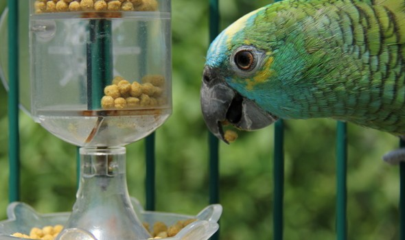Parrot-with-pellets-outside-e1421434182549