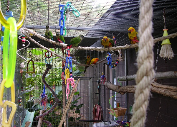 Full_flighted_babies_playing_in_the_outside_nursery_at_Hartman_Aviary