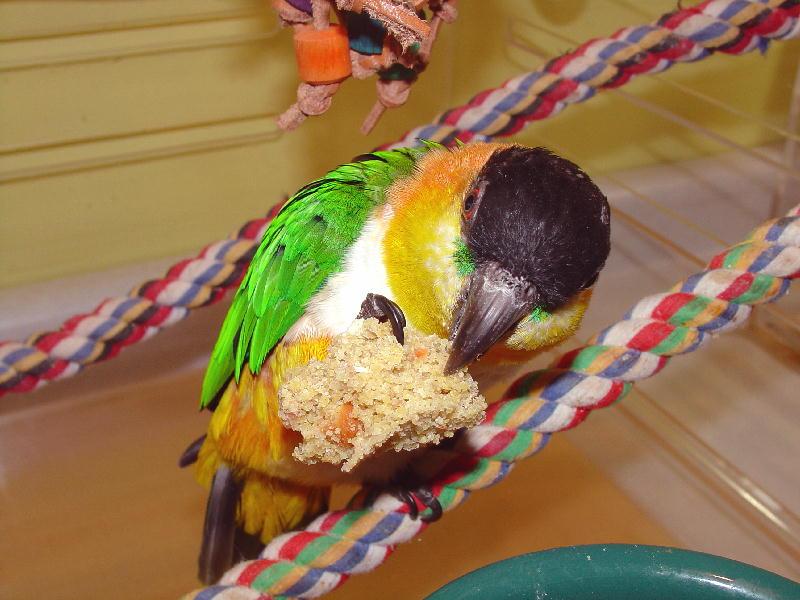 Bird-Bread-Birds-Eating-Scooter-Carrot-Cake