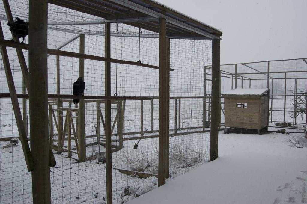 aviary_winter1