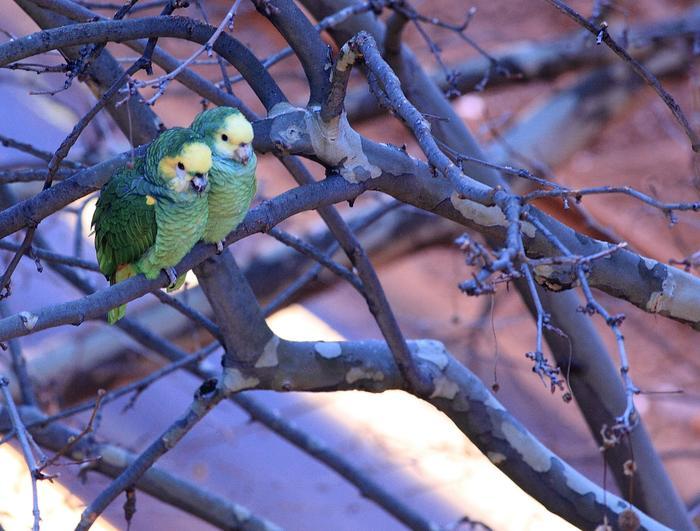 planet_parrot_2_graded-700x531