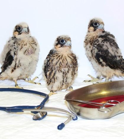 Pediatria aviar 2 --