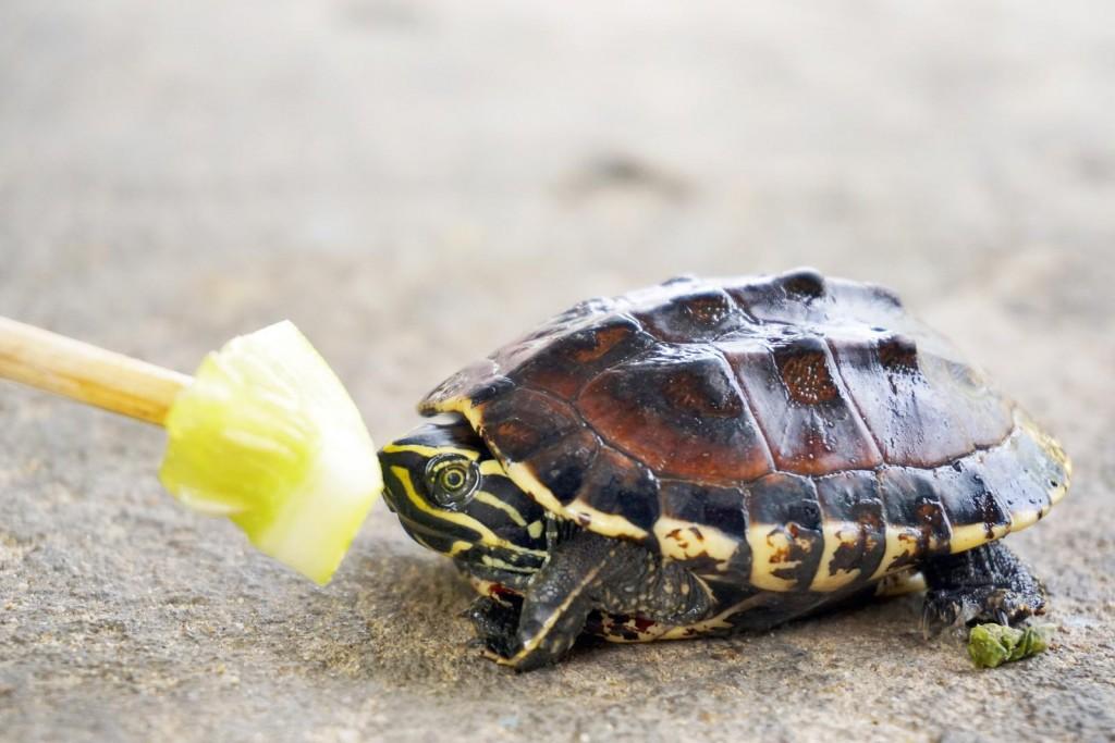 242737-1600x1067-turtle