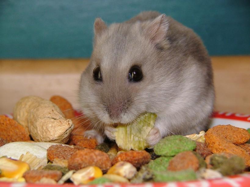37-hamster-food