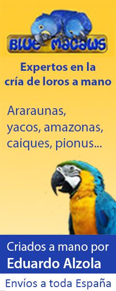 Criadero Blue Macaws - Loros criados a mano