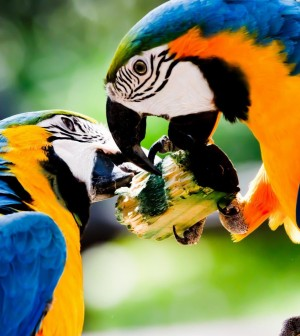 Bird-Blue-And-Yellow-Macaw-1280x1280