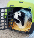 Bunny-in-Carrier