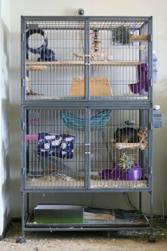 Chinchilla-cage-Ferret-Nation-full