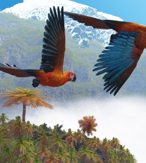 Cuban macaws in flight shutterstock_76413982