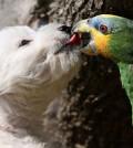 westie et perroquet duo