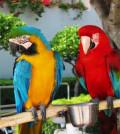 Guacamayos en percha