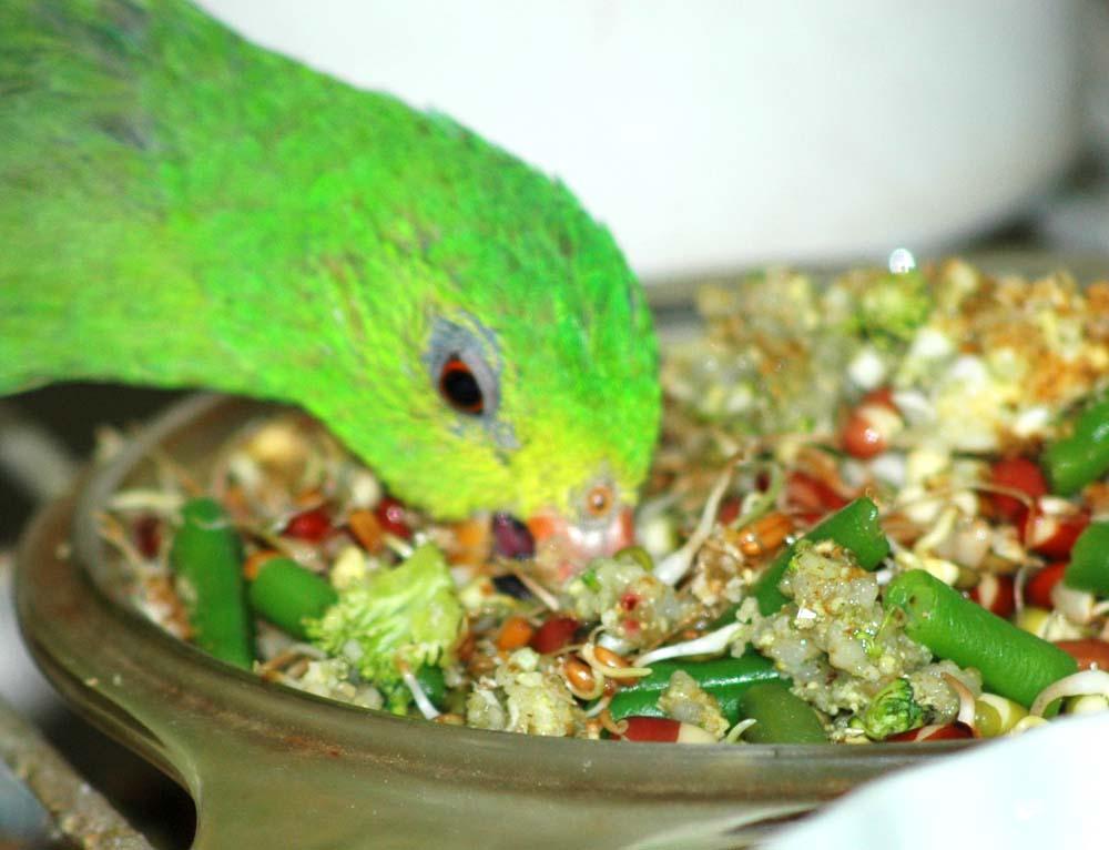 birdeating