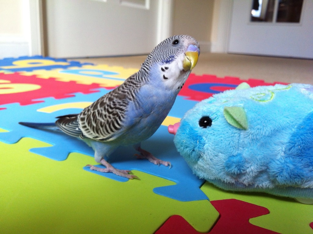 budgie-hamster-toy