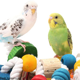 budgies-toys