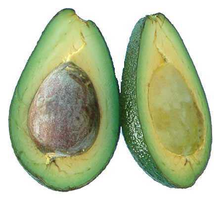 enb07424x_avocado