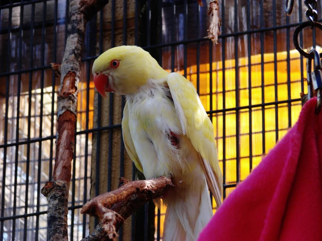 island-parrot-sanctuary-101