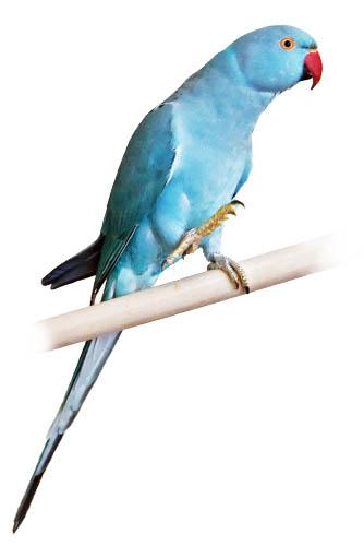 kramer azul