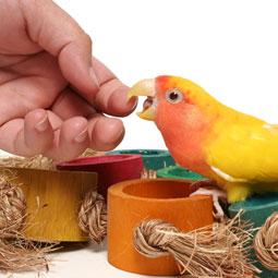 lovebird-bite