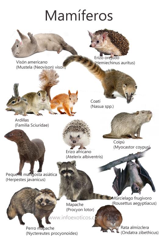 mamiferos ppp