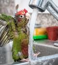parrot-cute-538329