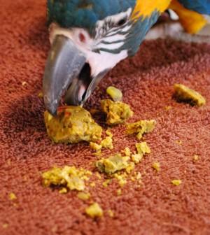 parrot mess