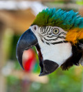 parrot-pictures-091