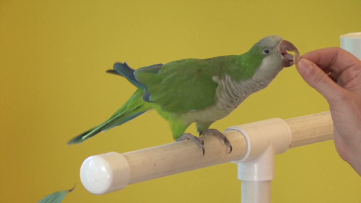 parrot_training8