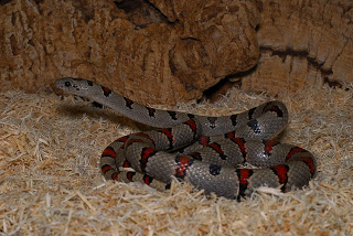 pet snake pictures