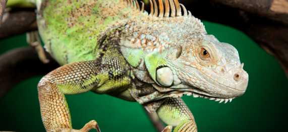 photo-exotic-reptile-care