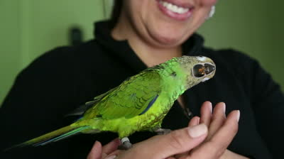 stock-footage-latin-woman-with-friendly-green-pet-parrot