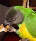 syd_eating_his_naartjie