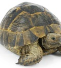 tortoise-02